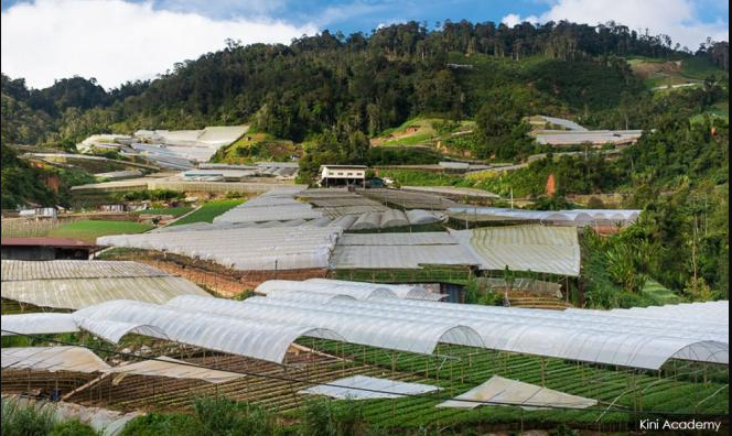 COMMENT | Cameron Highlands vegetable farmers' woes far from over